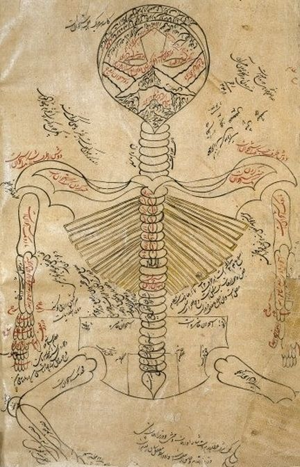 Illustration of the skeleton system based on Mansur's Anatomy in the Canon of Avicenna