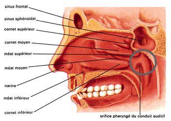 Tube respiratoire mal de gorge